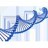Patrimoine génétique/ADN