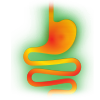 Estomac et intestin
