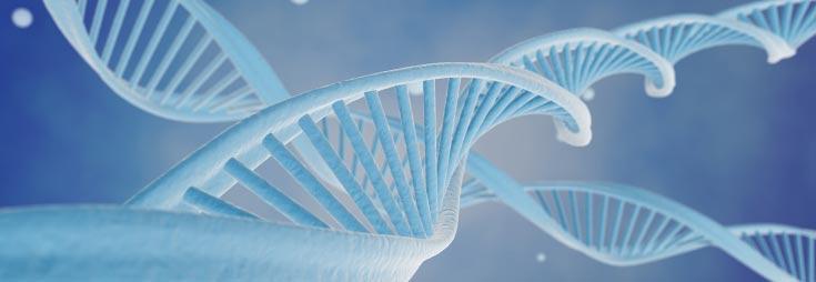 Patrimoine génétique