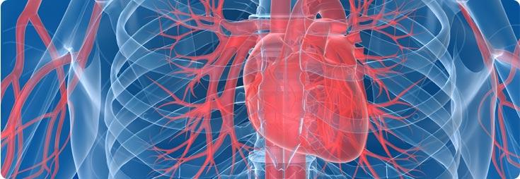 Santé du cœur, de la circulation sanguine, de la tension artérielle et des vaisseaux sanguins