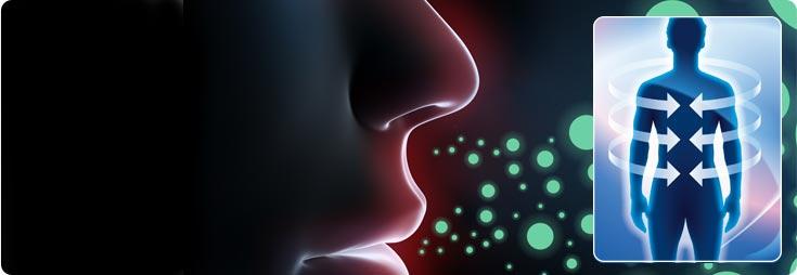 Système immunitaire (immunologie)